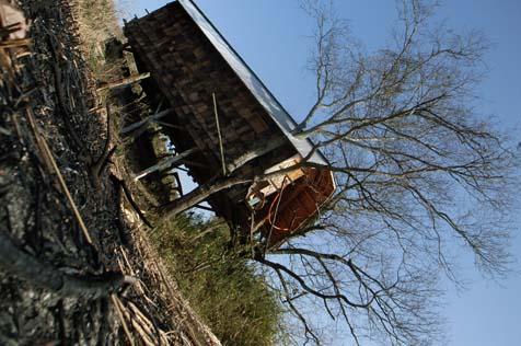 淡河のツリーハウス