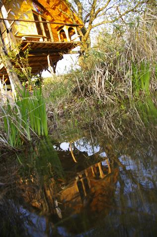 水面とツリーハウス