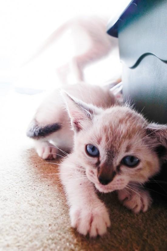cott事務所の猫