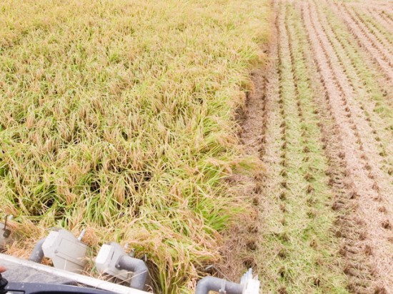 稲刈り機からの風景