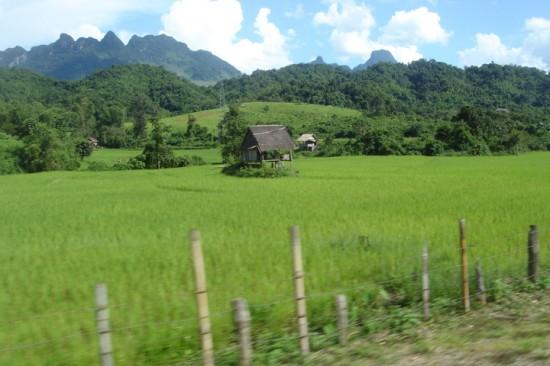田んぼの真ん中に佇む小屋/ラオス