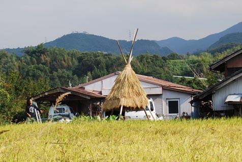 黄金色の絨毯と屋根