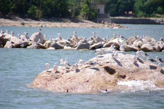 瀬戸内の海鳥たち