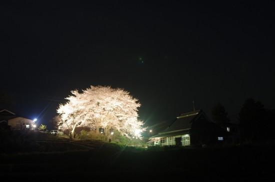 淡河の夜桜