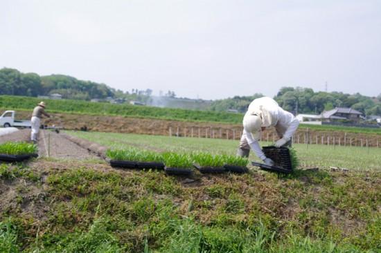 農作業最盛期