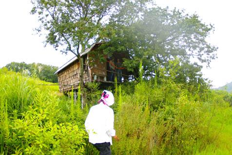 ツリーハウス外観 池方向から見る