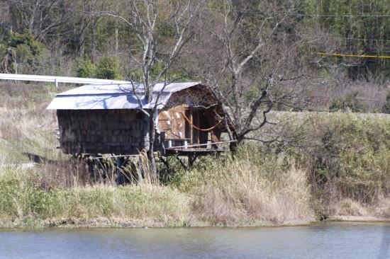 西側よりツリーハウスを見る