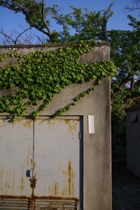 蔦と錆の倉庫
