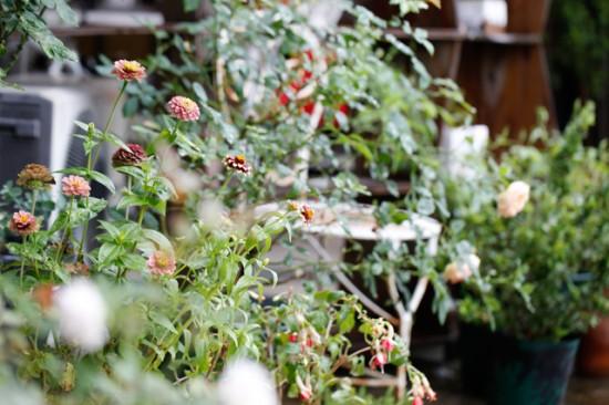 cottの庭