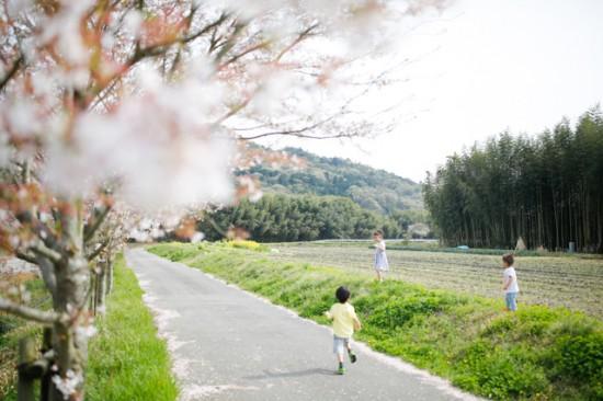 桜並木とこどもたち