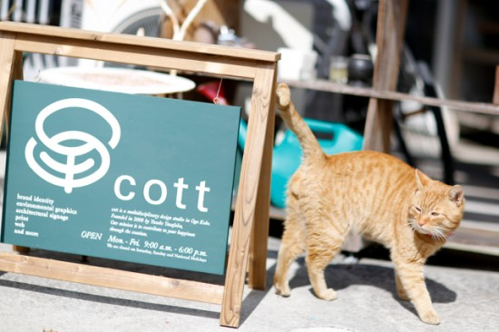 猫とcottの看板