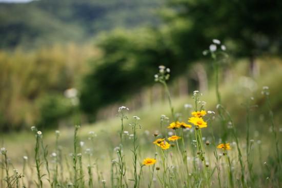 雑草のある風景